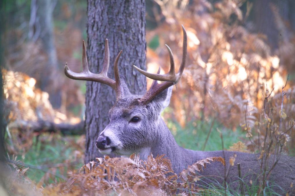 New York CWD Free for 11th Straight Year