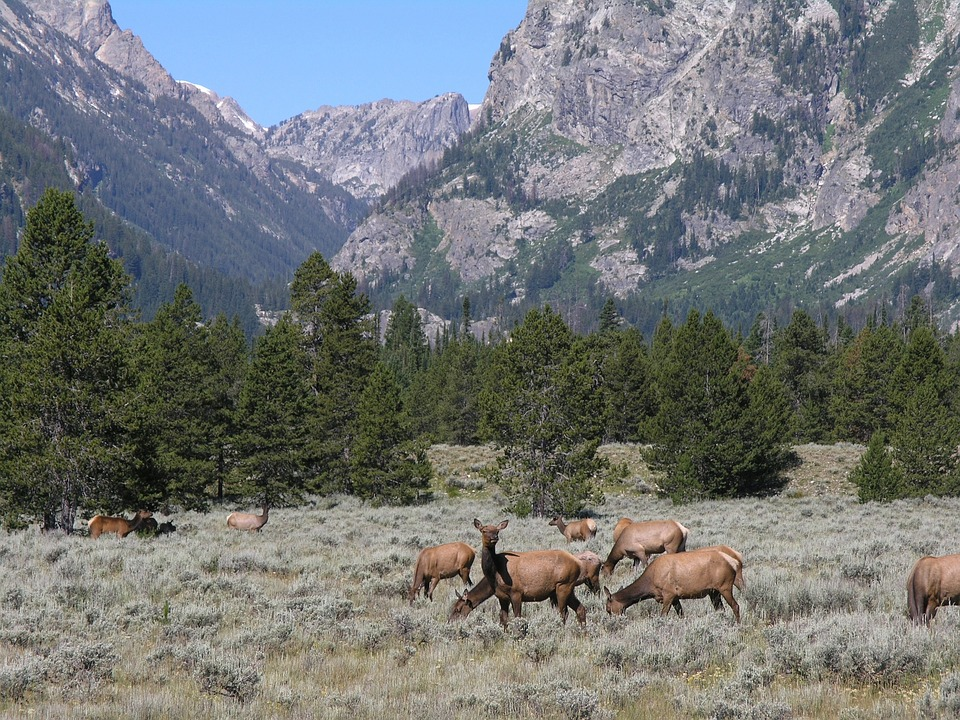 Utah Man Fined $10k for Claiming Residency in Three States for Hunting & Fishing Licenses