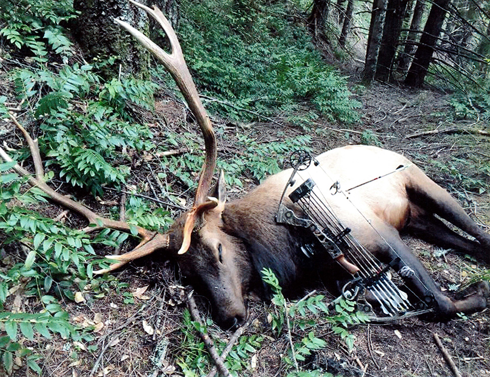 Oregon Man Sentenced After Claiming Already Dead Elk