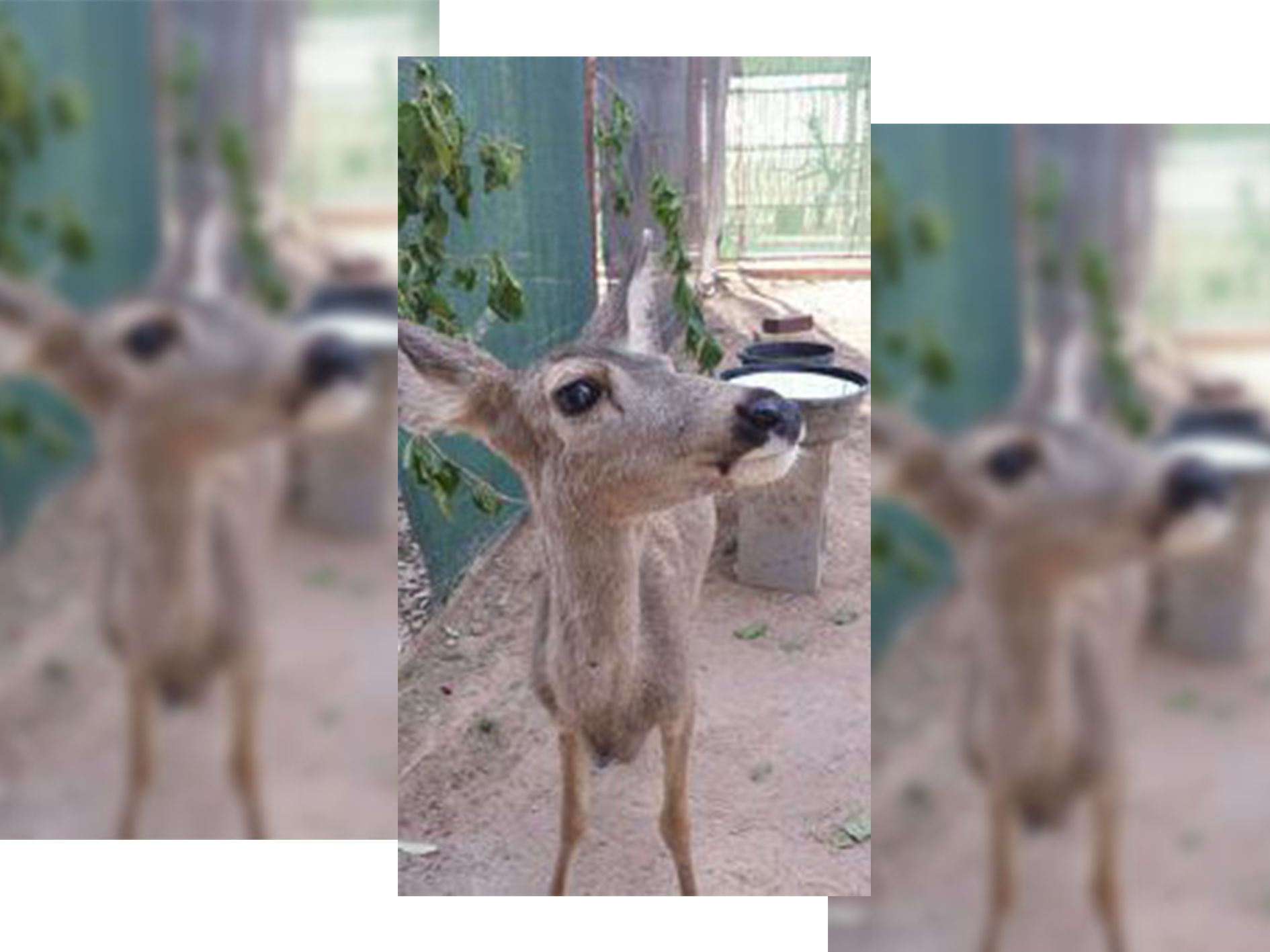 Arizona Officials Confiscate Kidnapped Deer Fawn