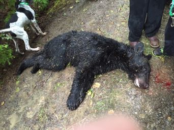 Hundreds of Illegally Killed Animals Found In Shocking Case of Poaching in Washington