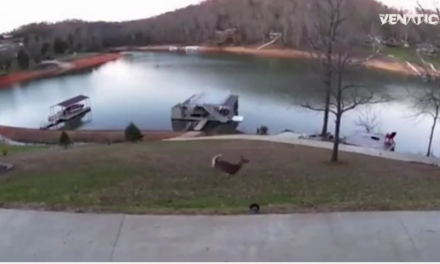 Tennessee Poachers Caught Illegally Shooting Deer on Home Surveillance Video