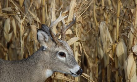 Texas' 50th CWD Case Discovered at Fifth Captive Deer Breeding Facility