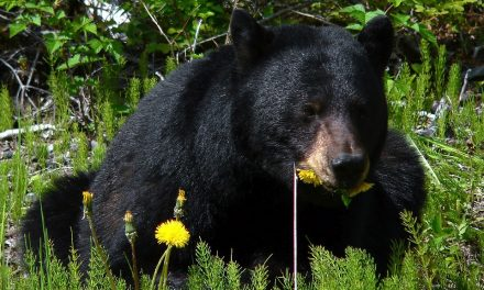 Teen killed by black bear in Alaska extreme race