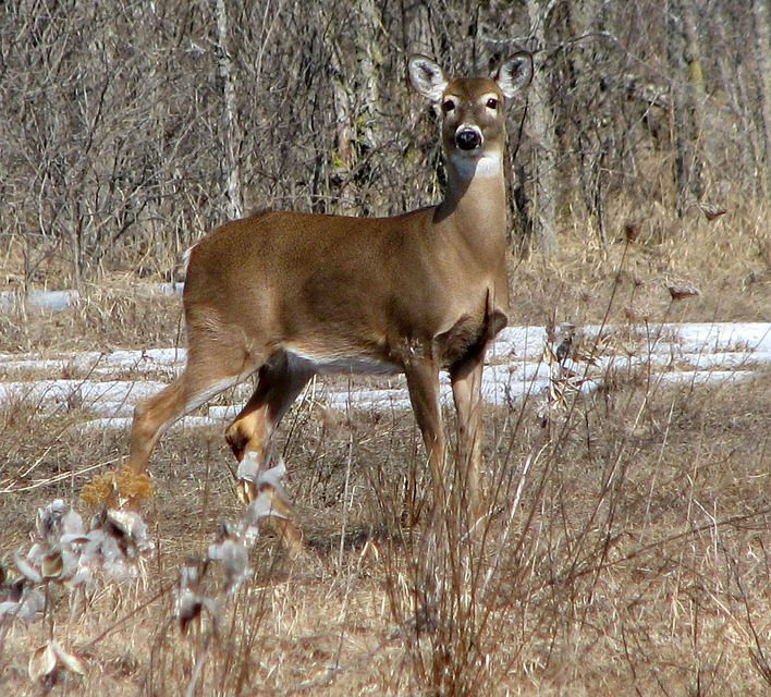 Maine Officials Propose a 44% Increase in Deer Hunting Permits for 2017