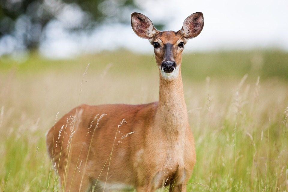 25 Convicted on 161 Poaching-Related Charges in Ohio