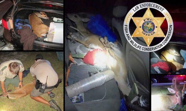 3 Endangered Deer Found Hog-Tied in Car