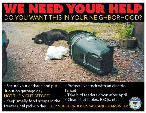 470 lb. Black Bear Euthanized by Alaska Officials