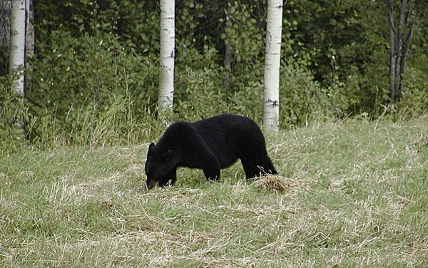 Colorado Officials Confirm Human DNA on Claws of Euthanized Bear