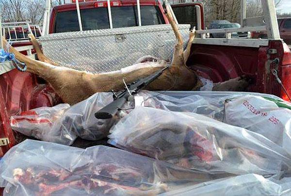 deer-in-back-of-truck-quebec-bust