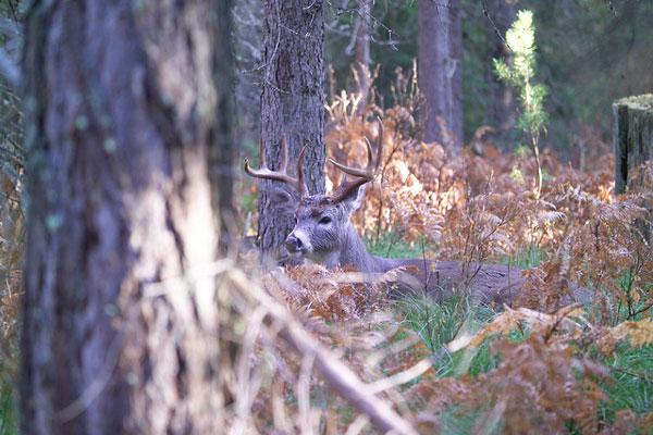 Combating CWD, Iowa Cuts Deer Tags