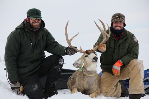 More hunters applying in Wyoming than ever before