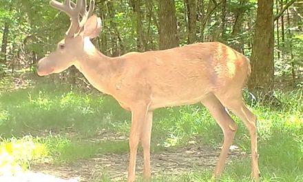 Mississippi Hunter Captures Bullwinkle Deer on Camera