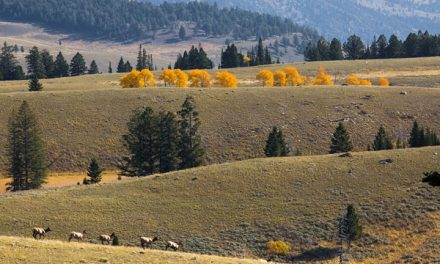 Elk Hunting on Colorado's Rabbit Mountain Set to Begin in September