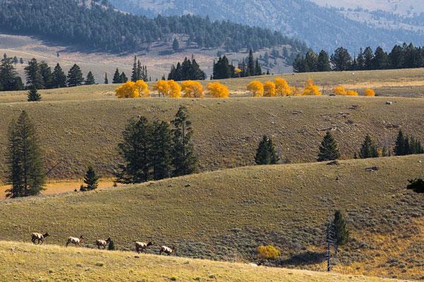 Elk Hunting on Colorado's Rabbit Mountain Set to Begin in September