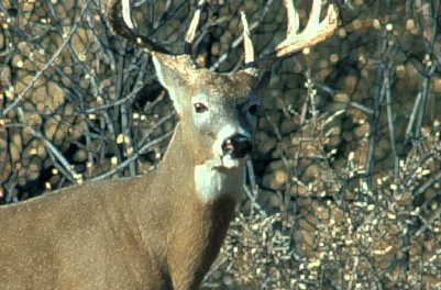 Due to Rebounding Populations, Minnesota Deer Hunters Get More Opportunity This Fall