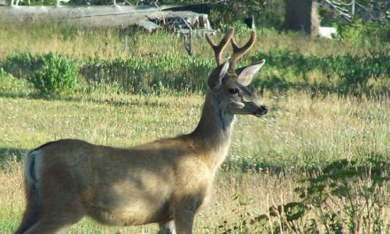 Kansas' Most Comprehensive Deer Study is Underway