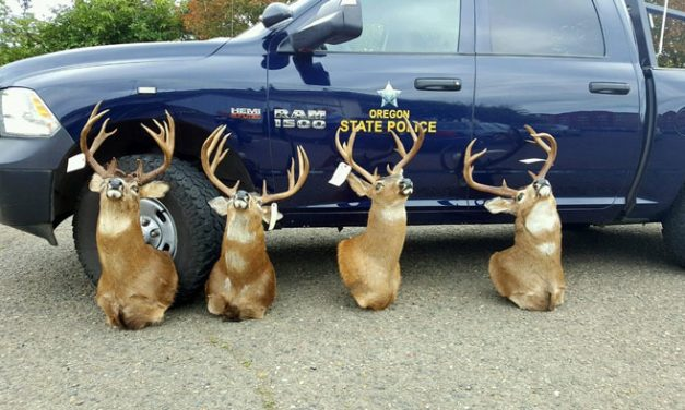 Oregon Man Pleads Guilty in Unlawful Mule Deer Case