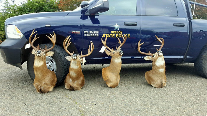 Oregon Man Pleads Guilty in Unlawful Mule Deer Case