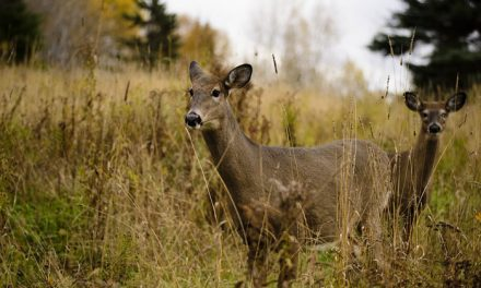 Two Suspicious Ear-Tagged Deer Test Negative for CWD
