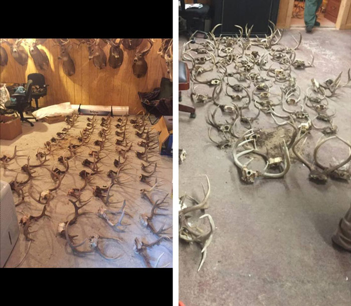 Two Brothers from Kentucky Nailed with Over 200 Counts of Poaching
