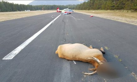 Small Plane Crashes into Two Elk During Landing