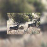 International Crimestoppers Donates Money for New Wildlife Decoy in Wyoming