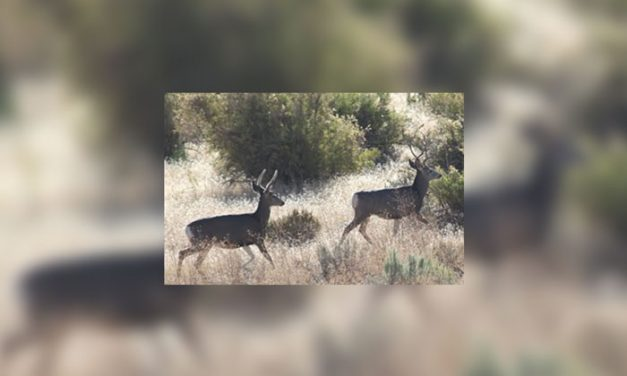 International Crimestoppers Donates Money for New Wildlife Decoy in Wyoming