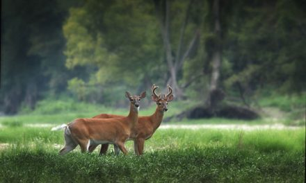 Two Louisiana Men Face Charges for Importing CWD Deer into Louisiana, Mississippi