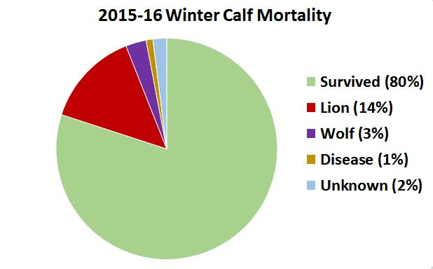 2015-2016-calf-mortality-chart