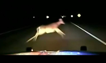 Minnesota Police Officer Hits Deer While Traveling at 114 MPH