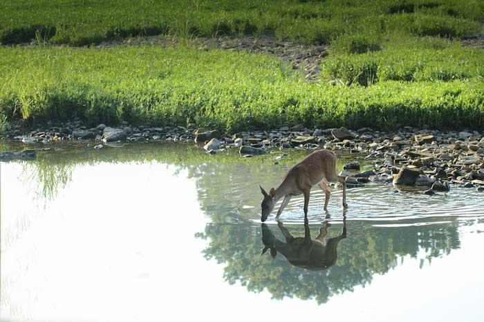 Kentucky Officials Believe EHD in Deer is Finally in Decline