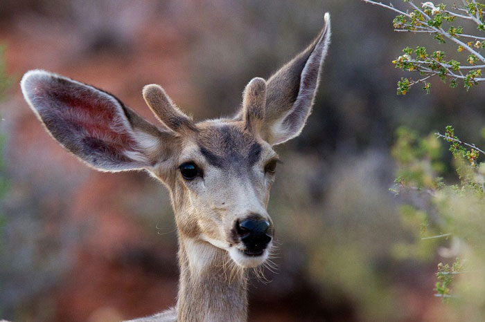 CWD Found on Western Slope of Bighorn Mountains for First Time