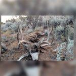 Seven Deer Poached in Utah