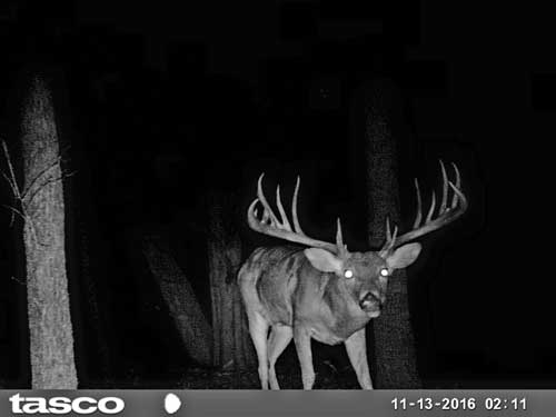 drinnon-buck-on-trail-cam